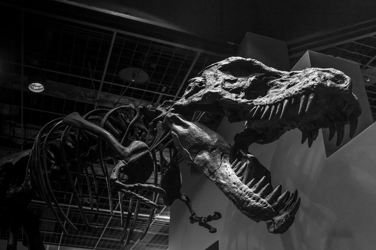 dinosauruswebshop